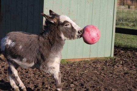 Pferde Spielzeug Jolly Ball Pferd Spielball 25cm unverwüstlich mit und ohne Duft – Bild 5