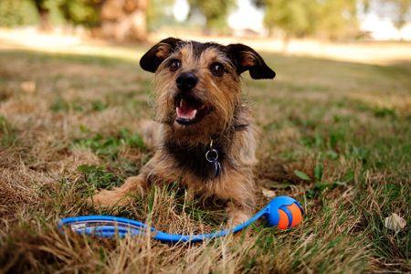 ChuckIt Wheelie Hundeball Größe M 6cm  – Bild 2