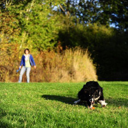 ChuckIt Wheelie Hundeball Größe M 6cm  – Bild 3
