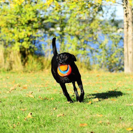 AKTION ChuckIt Kick Fetch Apportierball Hundespielball 19cm Schwimmfähig Größe L – Bild 3
