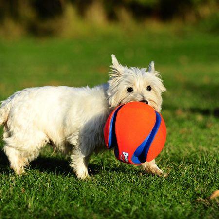 ChuckIt Kick Fetch schwimmfähiger Apportierball Hundespielball 19 cm Größe L – Bild 2