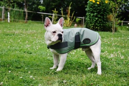 AKTION Hundemantel Mantel für Hunde Hundedecke für nass-kaltes Wetter – Bild 6