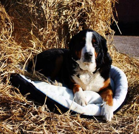 AKTION Hundebett, Hundekorb mit Baumwollbezug Dunkelblau S und M – Bild 5