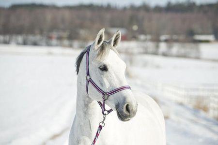 AKTION Pony Halfter und Führstrick 2m im Set  gestreift hellblau – Bild 3
