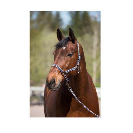 AKTION Pferde Nylon Halfter Gemustert mit Passendem Führstrick 2 m (Set) Auswahl – Bild 5