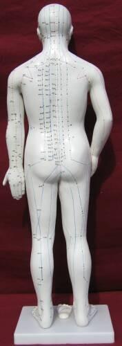 Akupunktur Modell  70-cm Mann von MedMod – Bild 3