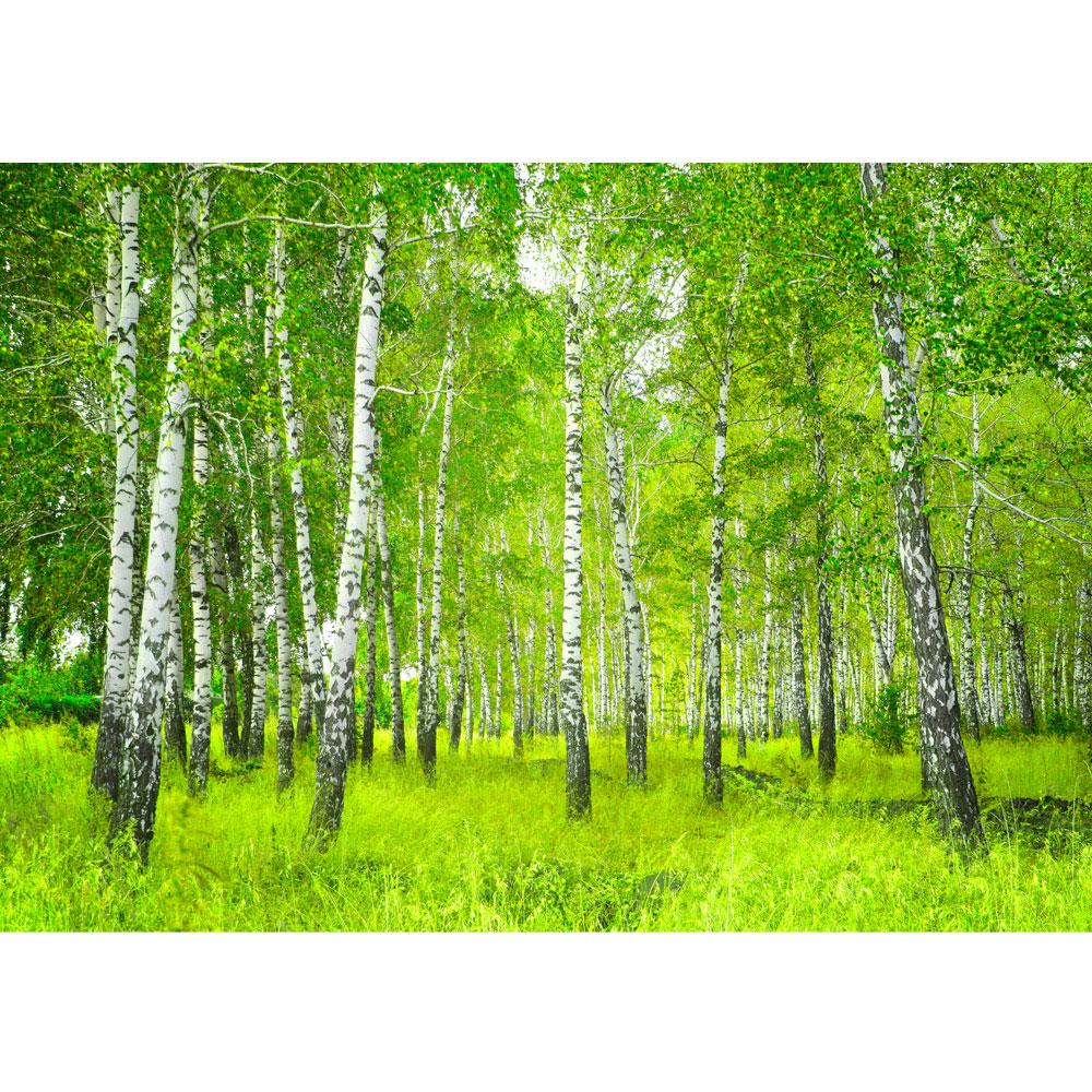 Fototapete-BIRKENWALD- 43P -350x260cm-Digitaldruck 7 Bahnen-mit Kleister-Wald