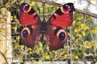 3 Schmetterlinge Metall + Aufhänger Bunt Schmetterling Windspiel Gartendeko 20cm 9