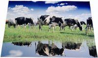 Fußmatte 45x68cm Fotodruck Schaf Kuh Ziege Pferd Fußabtreter Fußabstreifer 3