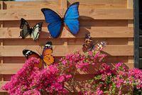 Schmetterling Metall Wand Deko Bunt Garten Wandschmuck Falter Schmetterlinge 1