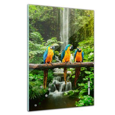 Memoboard - Tiere - Blau Gelbe Macaw Papageien – Bild 1