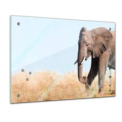 Memoboard - Tiere - Elefantenbulle  – Bild 1