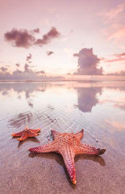 Fototapete - Seestern am Strand – Bild 2