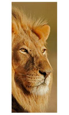 Türaufkleber - Afrikanischer Löwe – Bild 2