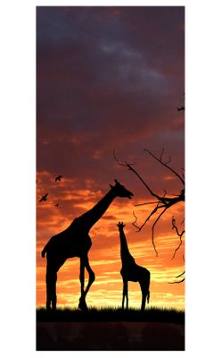 Türaufkleber - Giraffen - Südafrika – Bild 2
