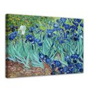 Vincent van Gogh - Iris