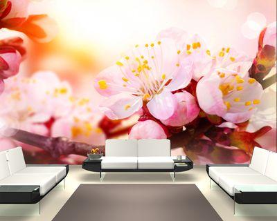 Fototapete - Aprikosenblüten - 155 cm x 100 cm - farbig – Bild 1