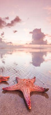 Türtapete selbstklebend Seestern am Strand 90 x 200 cm  Sand Meer Ozean Himmel Wolken rosa Tier beach