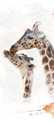 Türtapete selbstklebend Giraffe 90 x 200 cm  Wasserfarbe Aquarell Tier Afrika Savanne Sahara Akazie