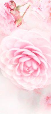 Türtapete selbstklebend rosa Rosen 90 x 200 cm  Wasserfarbe Aquarell Pflanze Blume Blüte Dornen Liebe Duft Garten Blatt – Bild 1