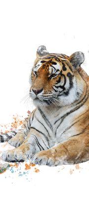 Türtapete selbstklebend Tiger 90 x 200 cm  Wasserfarbe Aquarell Tier Raubtier Katze Asien Tierbild – Bild 1