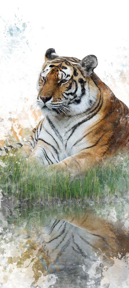 Türtapete Selbstklebend Tiger Ii 90 X 200 Cm Wasserfarbe Aquarell Tier Raubtier Katze Asien Tierbild