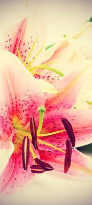 Türtapete selbstklebend Lilie III Vintage 90 x 200 cm  Blume Blüte Zierpflanze Pflanze Blatt Garten Natur – Bild 1