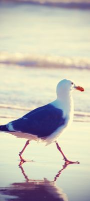 Türtapete selbstklebend Möwe am Strand Vintage 90 x 200 cm  Tier Vogel  Sandstrand Küste Ufer Meer gull – Bild 1