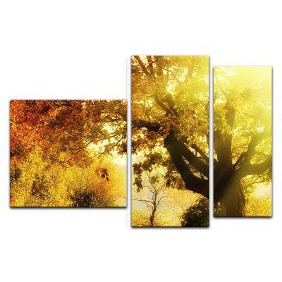 Leinwandbild - Herbstwald – Bild 2