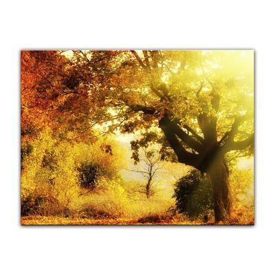 Leinwandbild - Herbstwald – Bild 4