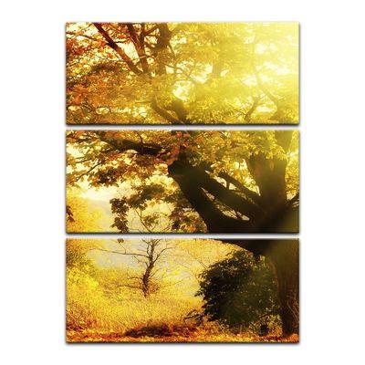 Leinwandbild - Herbstwald – Bild 5