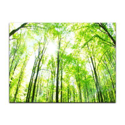 Glasbild - Grüner Wald 80x60 cm – Bild 1