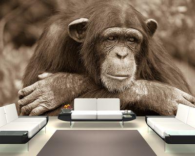 Fototapete Schimpanse  – Bild 3
