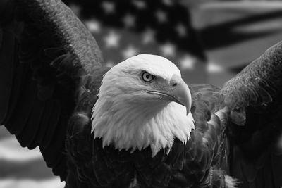 Fototapete American Eagle mit Flagge  – Bild 6