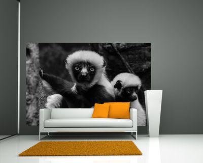 Fototapete Big Eyes - Indri Lemur  – Bild 5