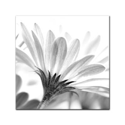 Leinwandbild - Blume - schwarz weiss  – Bild 2