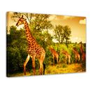 Leinwandbild - Giraffen - Südafrika 001