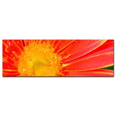 Leinwandbild - orange Gerbera – Bild 8
