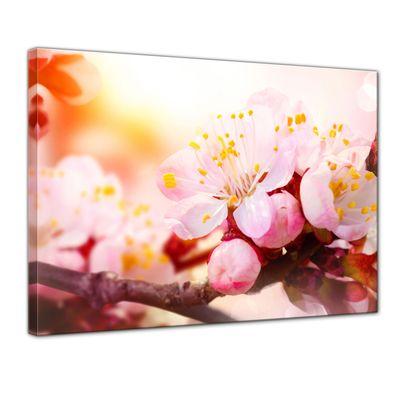 Leinwandbild - Aprikosenblüten – Bild 1
