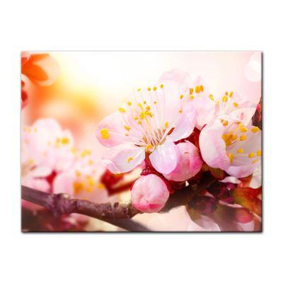 Leinwandbild - Aprikosenblüten – Bild 6
