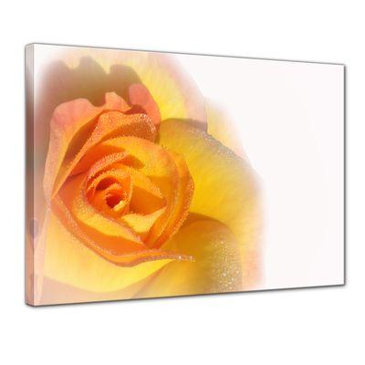 Leinwandbild - Gelbe Rose – Bild 1
