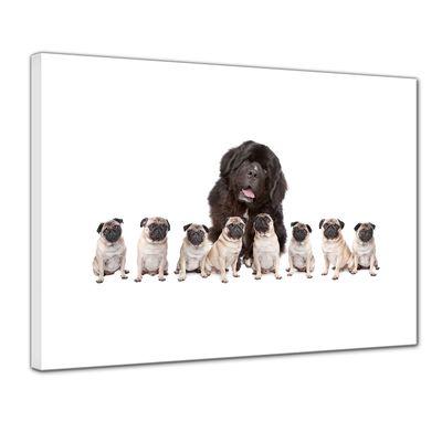 Leinwandbild - Grosser Hund mit kleinen Hunden