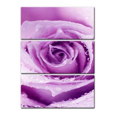 Leinwandbild - Lila Rose mit Tropfen II – Bild 9