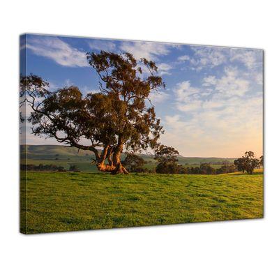 Leinwandbild - Canola Field - Clare Valley, Australien