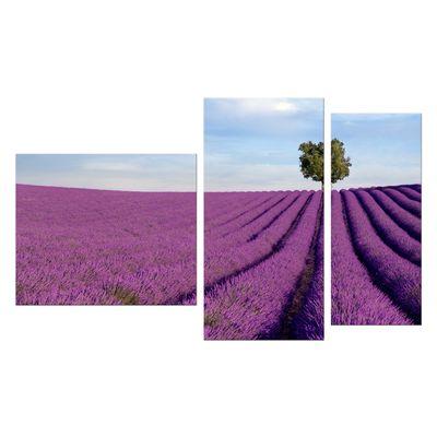 Leinwandbild - Lavendelfeld in der Provence - Frankreich II – Bild 9