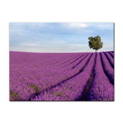 Leinwandbild - Lavendelfeld in der Provence - Frankreich II – Bild 2