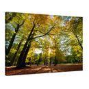 Leinwandbild - Blätterfall im Herbst 001