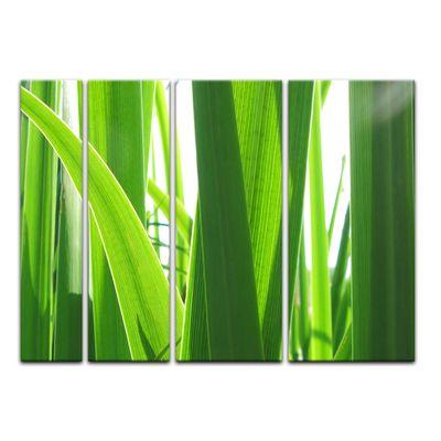 Leinwandbild - Gras – Bild 13
