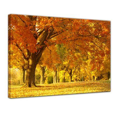 Leinwandbild - Herbst Szene – Bild 1