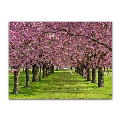 Leinwandbild - Kirschblüten – Bild 6